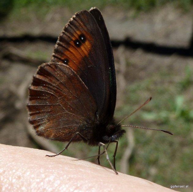 Der Schmetterling konnte nicht von uns lassen