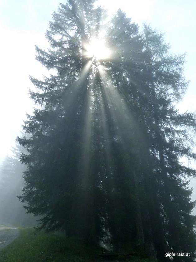 Wir tauchen in den Nebel ein