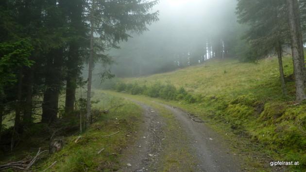 Viele Forststraßenhöhenmeter sind heute dabei