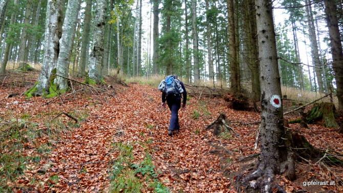 """Auf den Kühberg, den ersten von vielen kleinen """"Gipfeln""""..."""