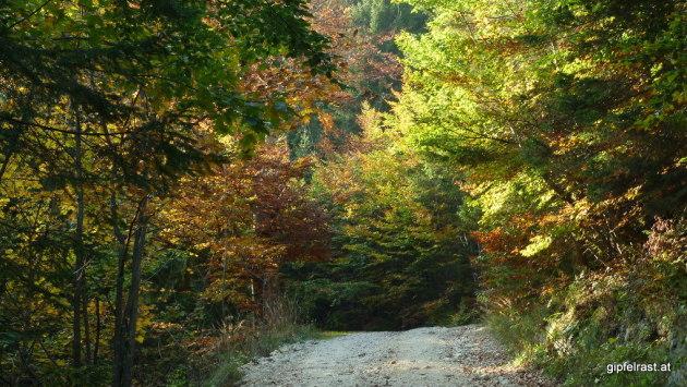 Auch wenn uns heuer der Sommer vorenthalten wurde, um den Herbst müssen wir uns keine Sorgen machen!
