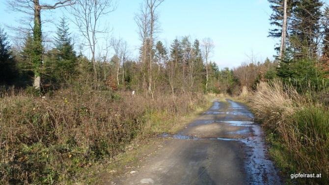 Gemütlicher Forststraßenabschnitt