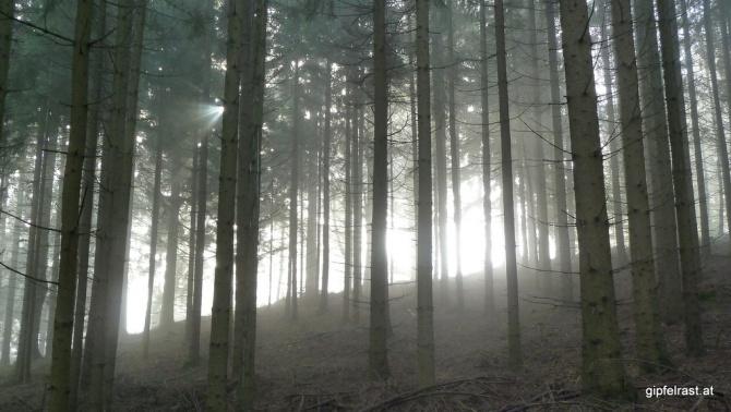 Lichtspiele im Hochwald