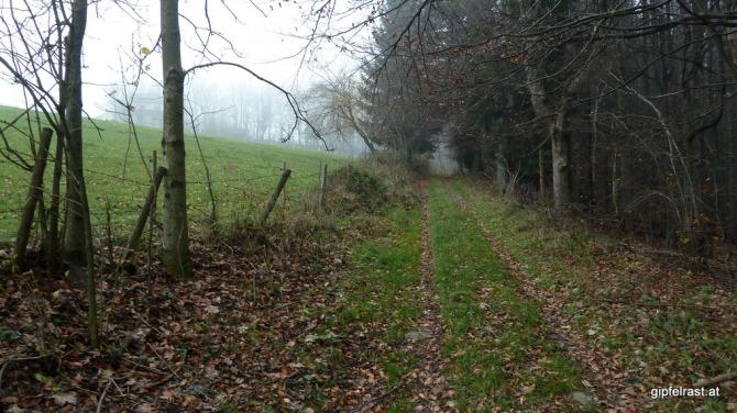 Am Waldrand, rechts wird scharf geschossen