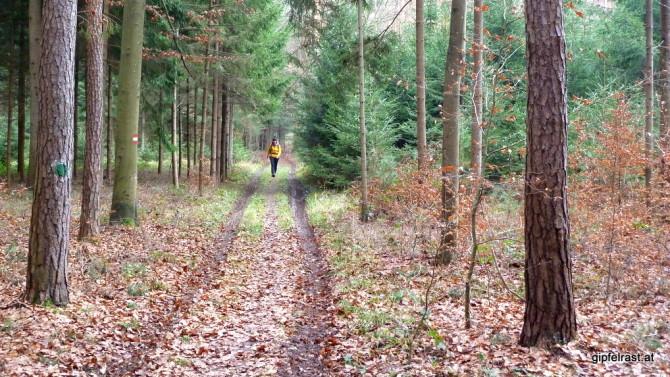 Durch den Ziegelwald