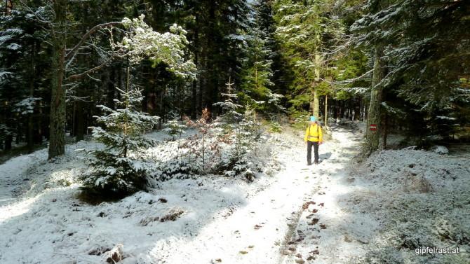 Durch den winterlichen Wald