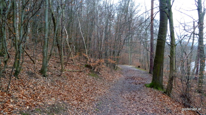 Schlammige Waldwege sind heute Programm!