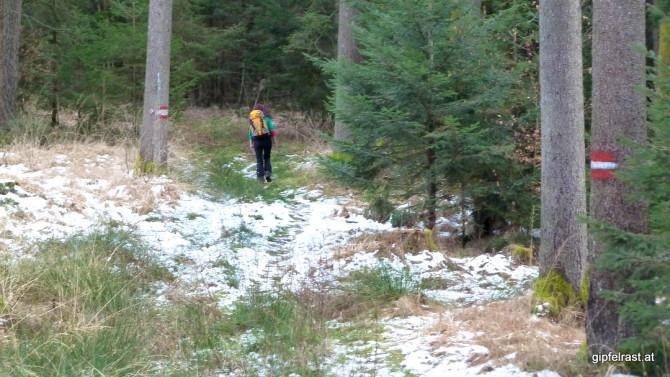 Der 06er führt uns in den Wald