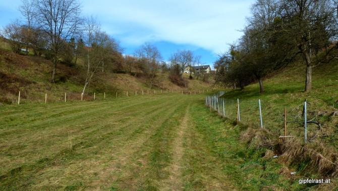 Es grünt so grün - der Wanderweg nach Mariazell