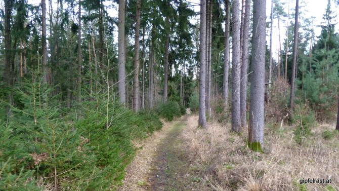"Am ""Waldweg der Lebensfreude"""