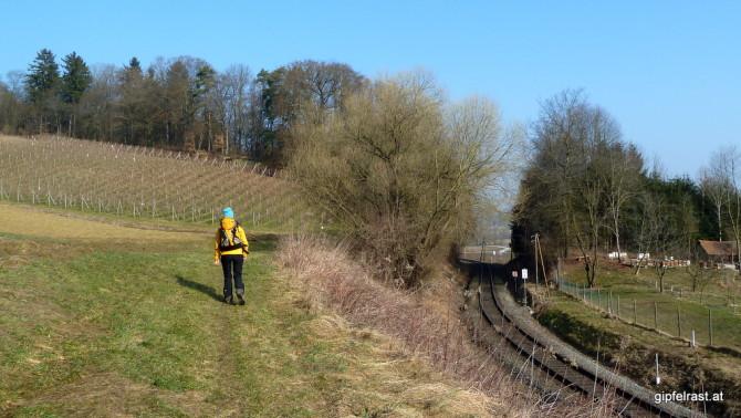 Wein, Weib und Eisenbahn! Zwischen Rebstöcken und den Gleisen der Thermenbahn entschwinden wir der Söchauer Tiefebene!