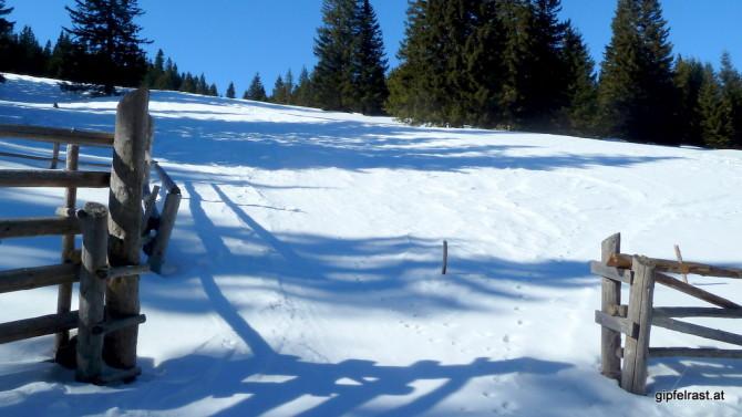 Weiter auf der Wiese oberhalb der Hütte