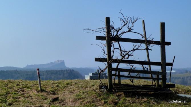Eine einzelne Rebe spendet dort spartanischen (Wind-)Schatten während das Wandervolk die Riegersburg bewundert.