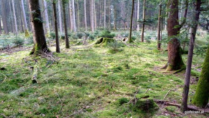 Der Wald am Siedelberg