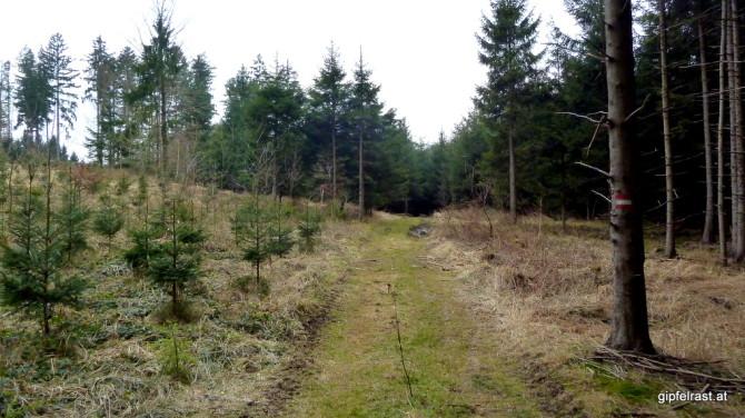 Im Wald bei Oppelhausen