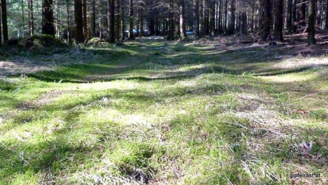 Weicher Waldboden entschädigt dafür!