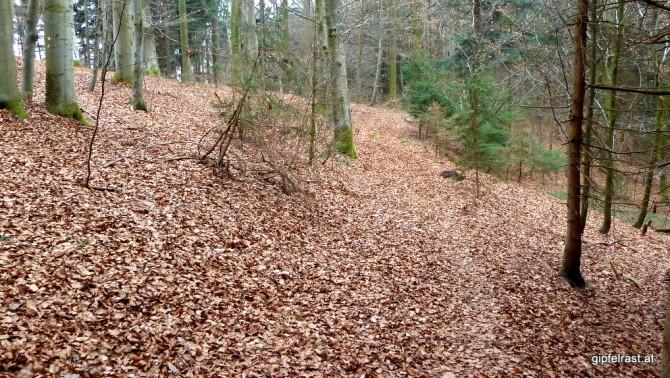 Dem Weg sieht man wirklich nicht an, dass er quer durch ganz Österreich verläuft
