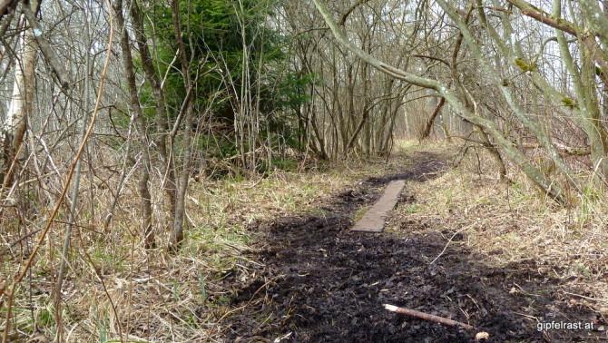 Durchs Ibmer Moor