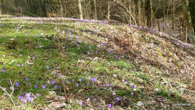 Zumindest auf dieser Wiese ist der Frühling schon angekommen!