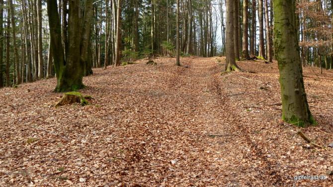 ... und Waldwege führt mich dieser Abschnitt