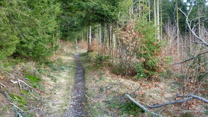 Waldwege im Hausruck