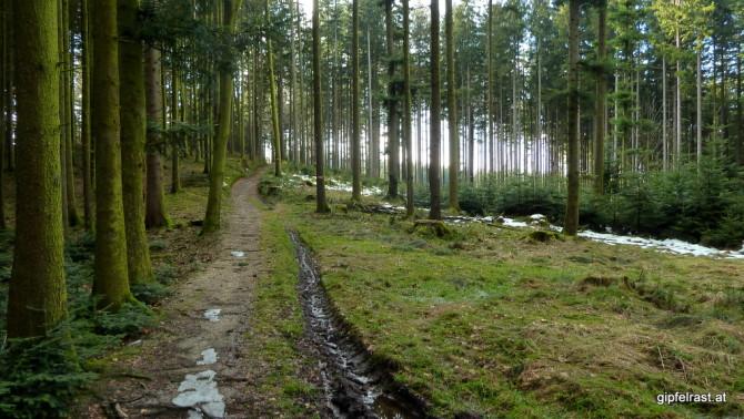 Weiter durch den Wald