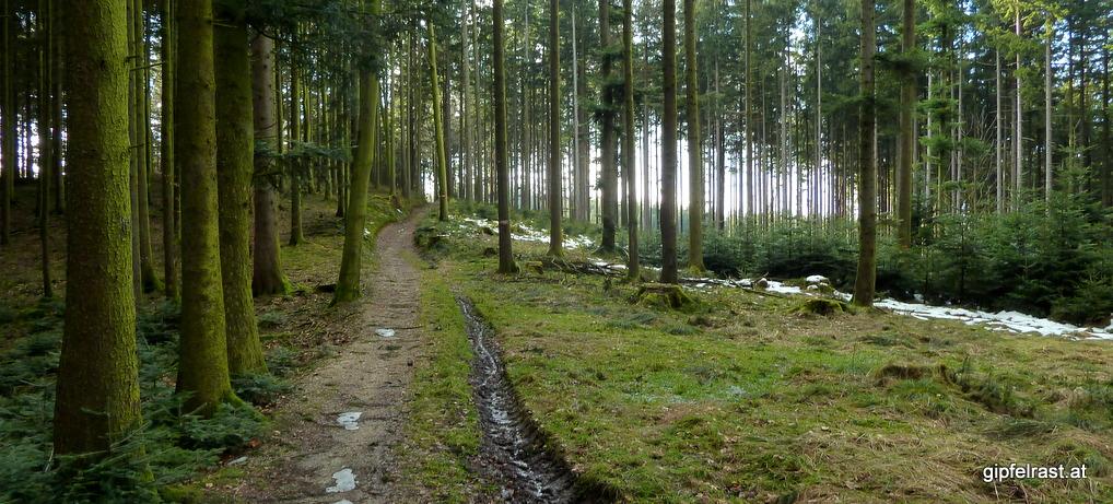Rupertiweg 10: In den Wäldern des Hausruck