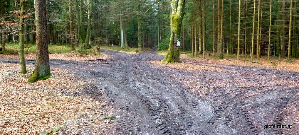 Rupertiweg 10: Wald, Moor & Asphalt