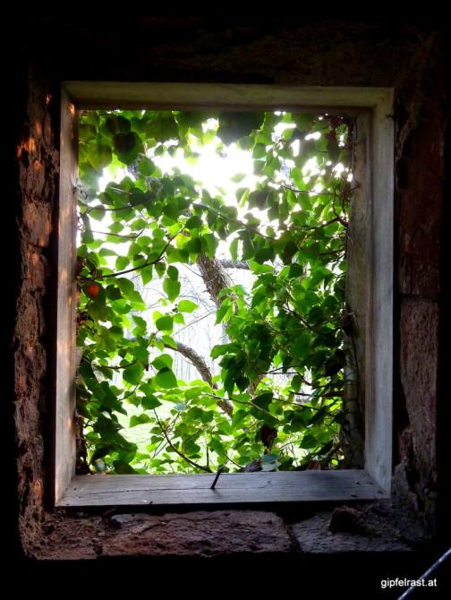 Ein begrüntes Fenster bildet den Rahmen für den Sonnenuntergang