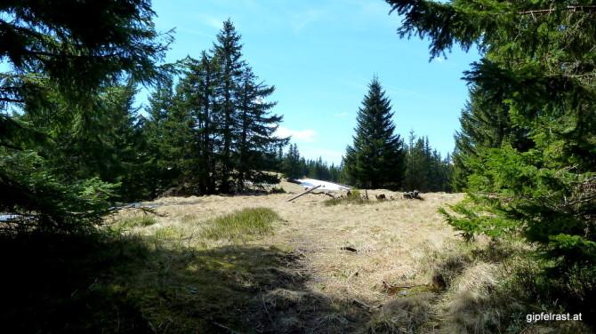 Hinaus auf weite Almwiesen