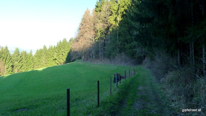 So ein schattiger Waldrand ist heute sehr willkommen