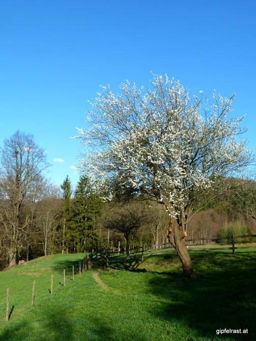 Der Frühling in Licht...