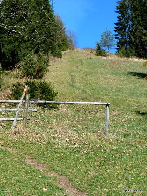 Die Aussicht vom Haneggkogel muss erst verdient werden.