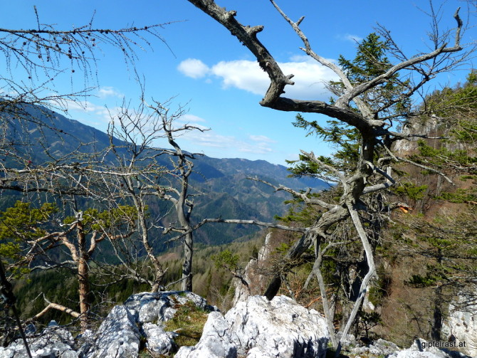 Knorriges Alpinstillleben