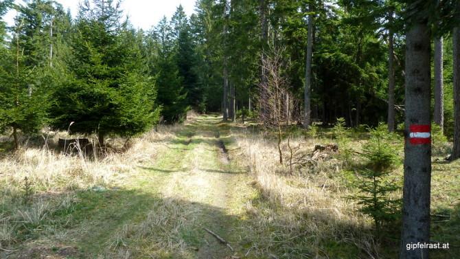 Durch den Wald zwischen Geras und Langau