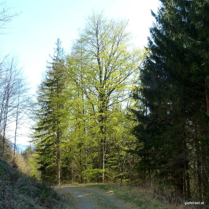 Frühling: Eine grüne Explosion in Zeitlupe.