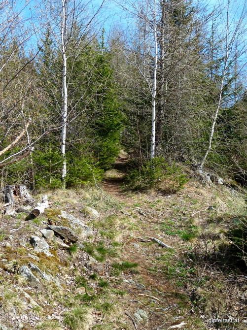 Schmaler Waldsteig zum Fuchskogel