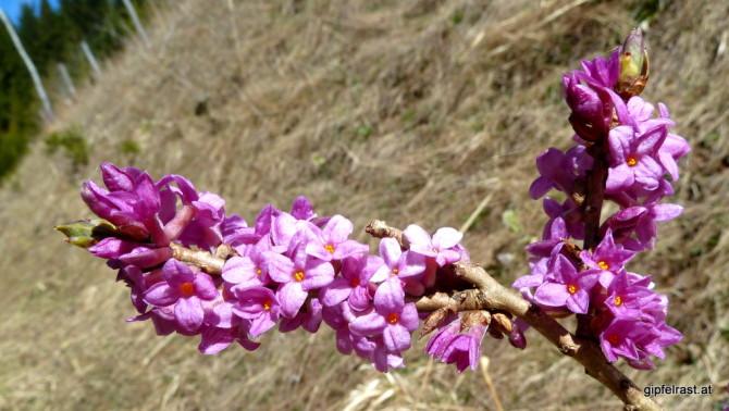 Ein Frühlingsbote