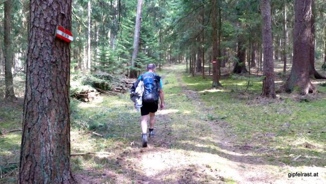Durch den Wald bei Viehhappeln