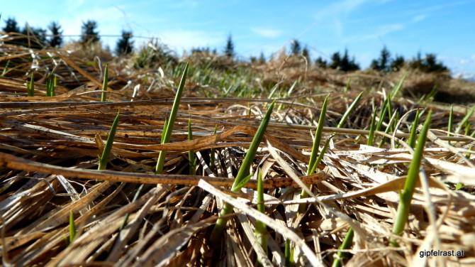 Noch hat hier das Braun des Herbstes oberhand, doch das zarte Grün des Frühlings zeigt sich bereits kämpferisch.