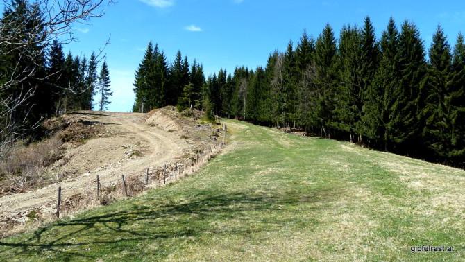Almwiesen für den Wanderer, Autobahnen für den Forstmann
