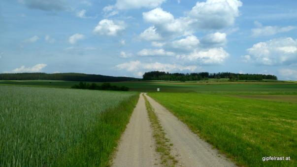 Feldweg nach Niederedlitz