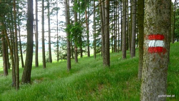 Wald- und Wiesenwanderweg