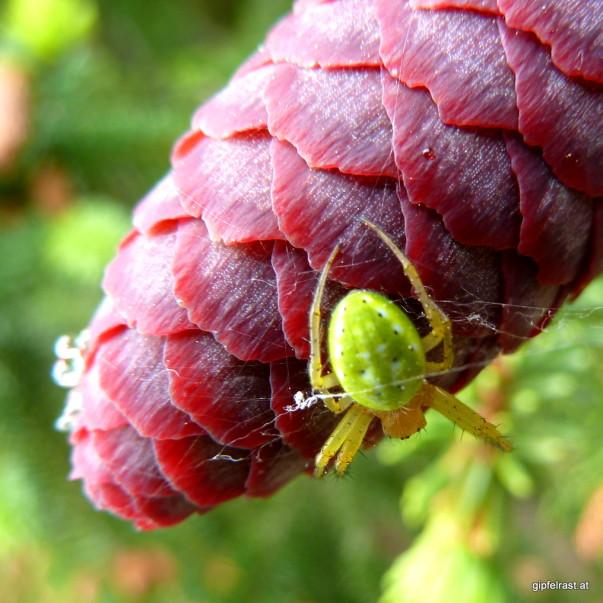 Flora und Fauna des Waldviertels