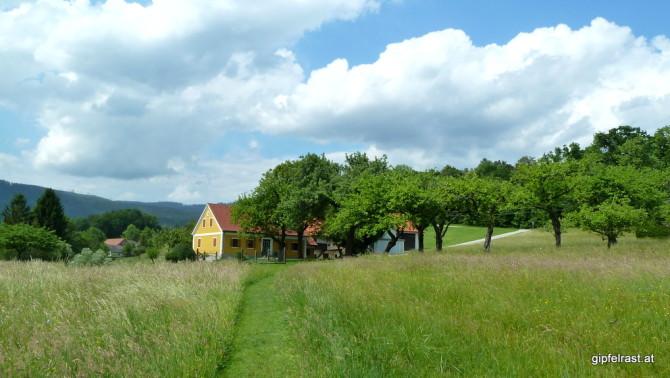 Über Wiesen hinauf nach Rinnegg