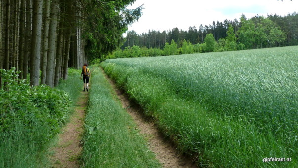 Zwischen Wald und Weizen - glutenfrei Wandern ist hier kein Thema!
