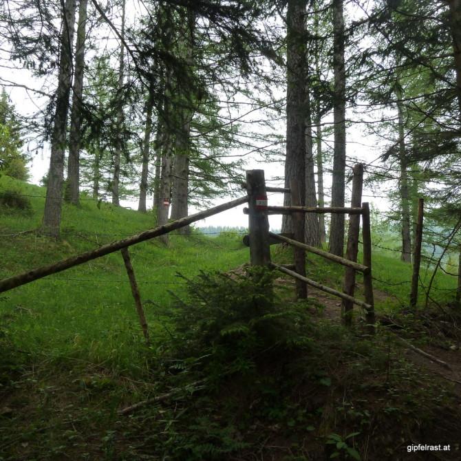 Aus dem Wald