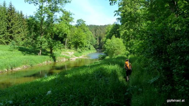 Wieder mal mehr Vegetation als Weg