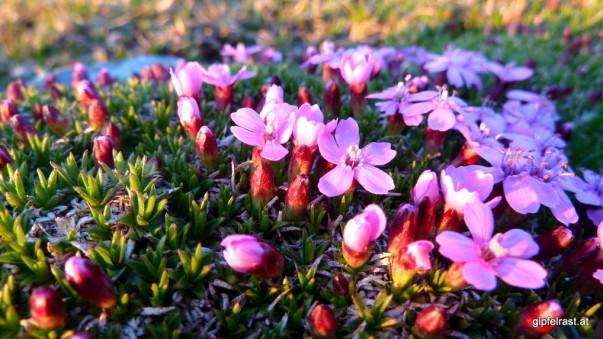 Blumenpolster