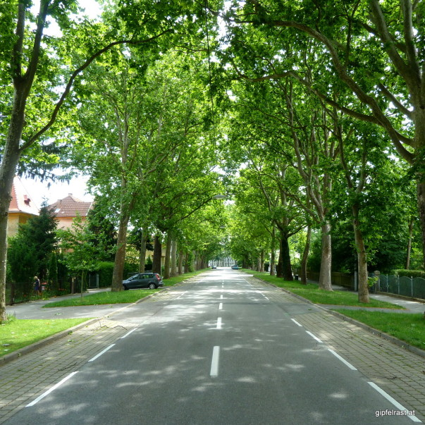 In der Eggenberger Allee